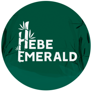 Hebe ErmaHEBE EMERALD AGRO INDUSTRIES PRIVATE LIMITED